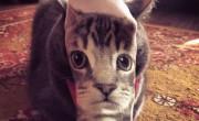 macak lisica