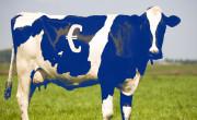 Skupna kmetijska Unija