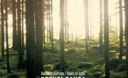 Brencl banda: Korenine svetlobe / Roots of Light