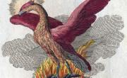 Phoenix - Fabelwesen