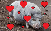 Don't go porking my heart