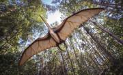 Flyin' flyin' in the sky, pterosaurs fly, soo highhh, flyinnn
