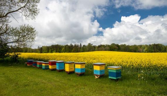 Čebelarjenje in kmetijstvo.