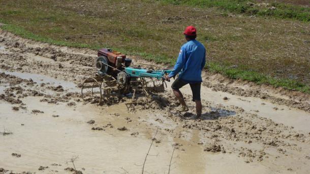 pokvarjen riž