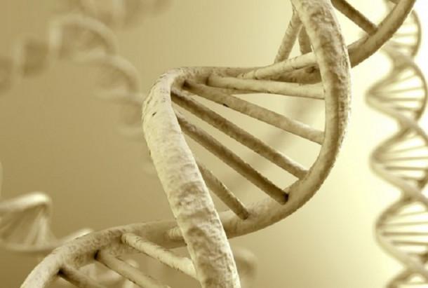 starodavna DNK