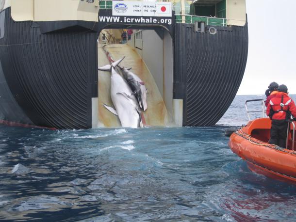 Japonska kitolov