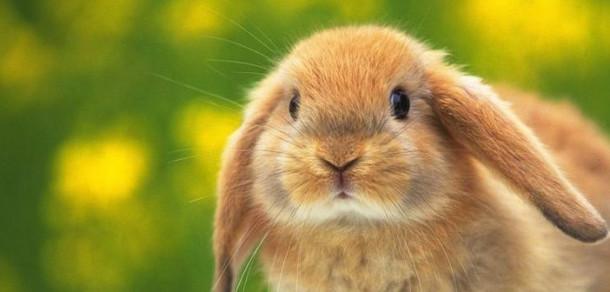 Pomanjkanje zajcev?