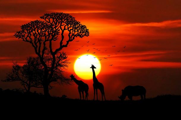 Afriška savana.