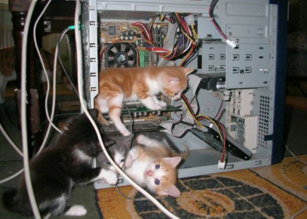 Cats in computer
