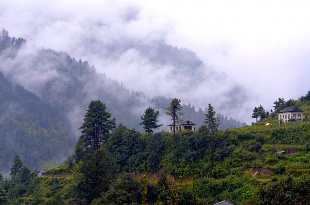 Nepalski gozd